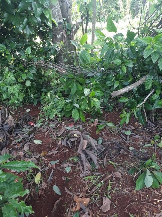 chống trộm vườn cây capitech